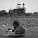 Сторож Спасо-Каменного монастыря. сентябрь 2011. снято на Кэнон Т70