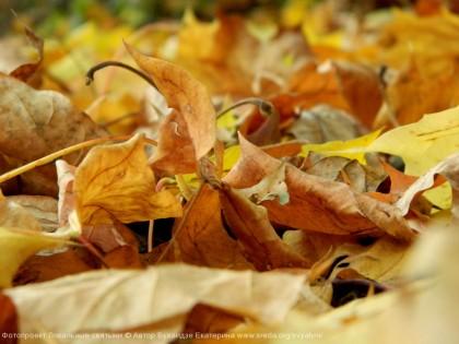 Осенние шорохи
