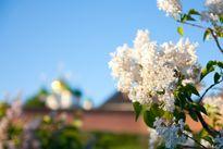 Арутюнова Елена - Весна