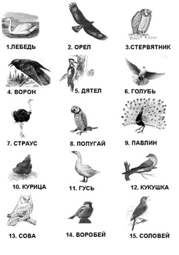Орнитологическая игра